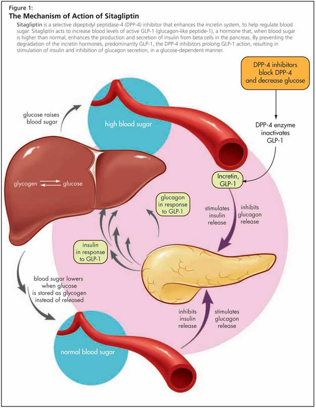 Type 2 Diabetes among Older Adults | healthPlexus.net