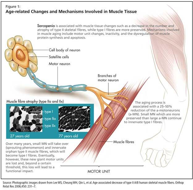 molecular mechanism of steroid hormone action