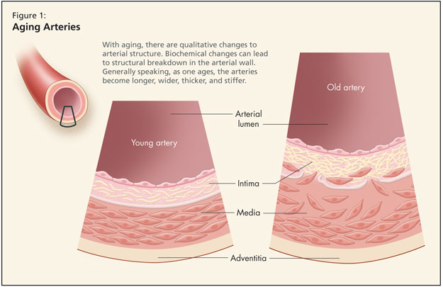 Normal Changes of Aging in the Cardiovascular System